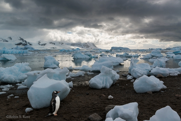 Antarctica 22