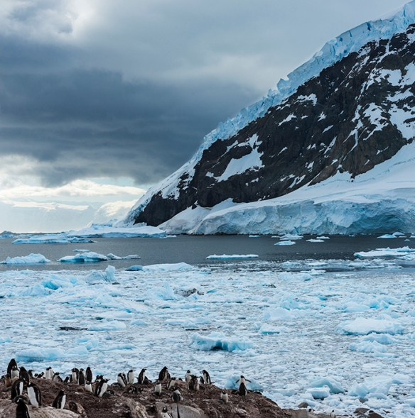 Antarctica 23