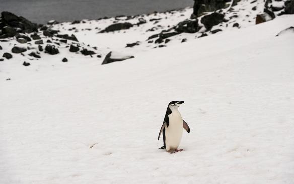 Antarctica 32