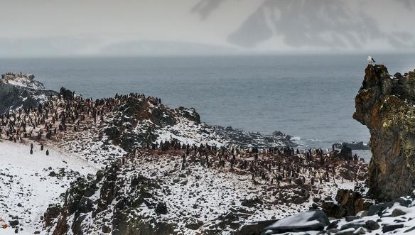 Antarctica 33
