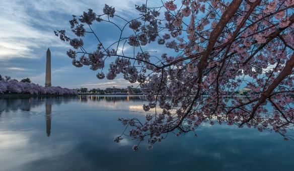 Cherry Blossom Chaos 01A