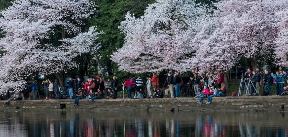 Cherry Blossom Chaos 03