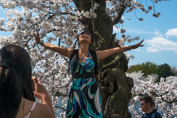 Cherry Blossom Chaos 04