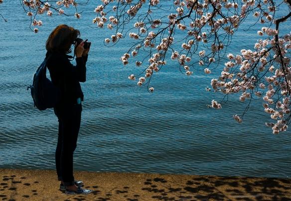 Cherry Blossom Chaos 06