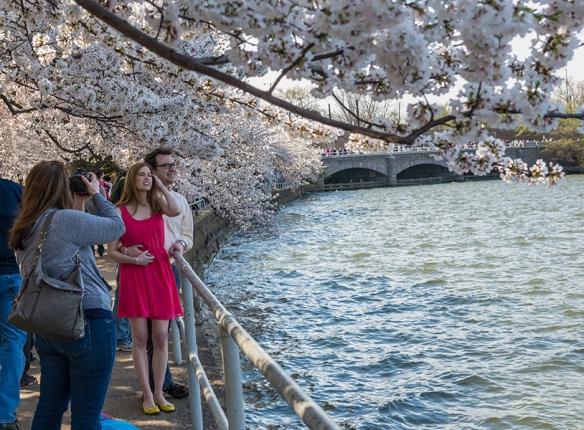 Cherry Blossom Chaos 10