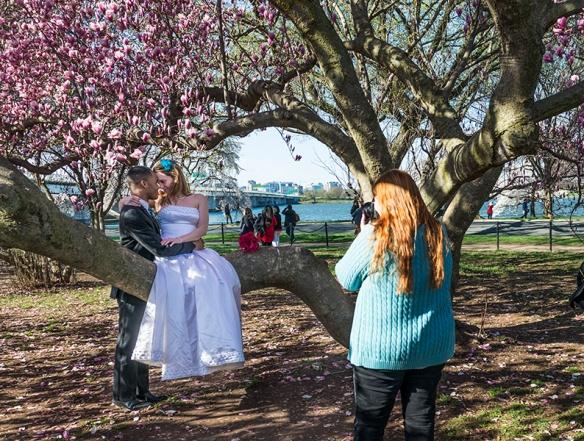 Cherry Blossom Chaos 11
