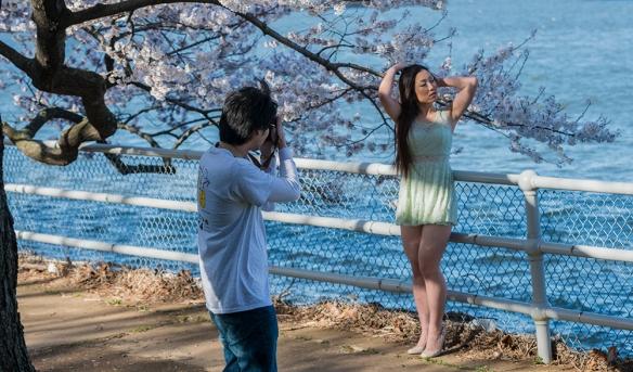 Cherry Blossom Chaos 12
