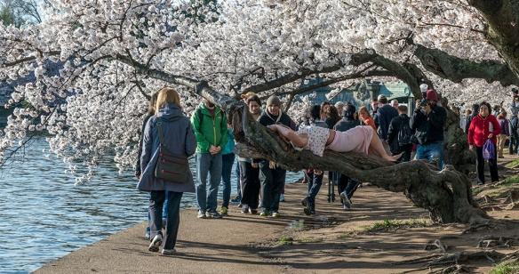 Cherry Blossom Chaos 14