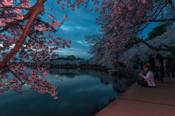 Cherry Blossom Chaos 18