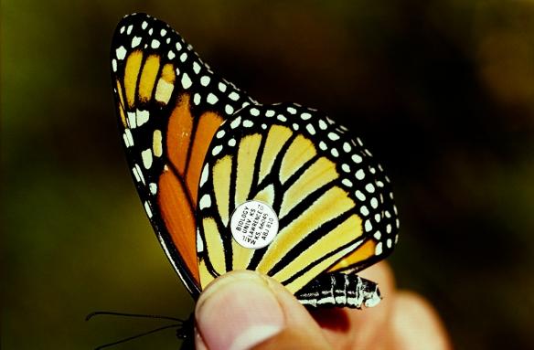 Monarch 01 1602-21