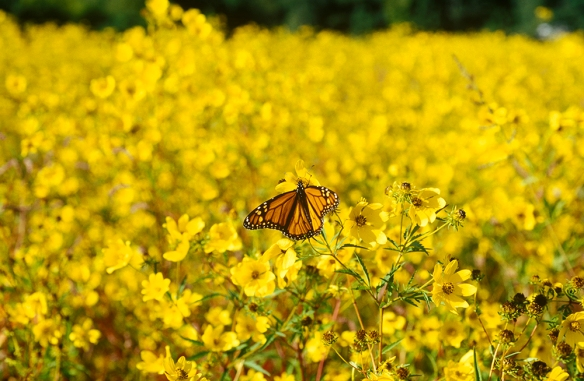 Monarch 02 1602-33