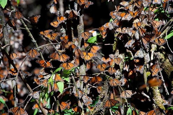 Monarch 05 D-11-01-20-0501