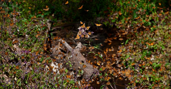 Monarch 09 D-11-01-18-237_238 PAN