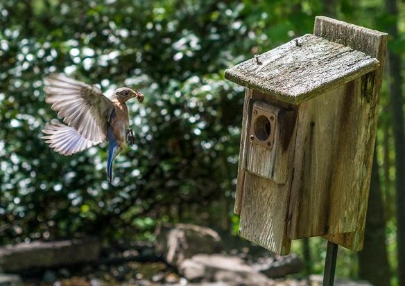 Bluebird D-16-05-02-9754