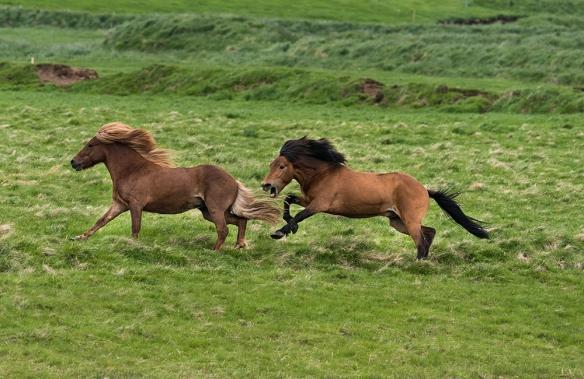 D-17-06-06-3404 Crop (horses)
